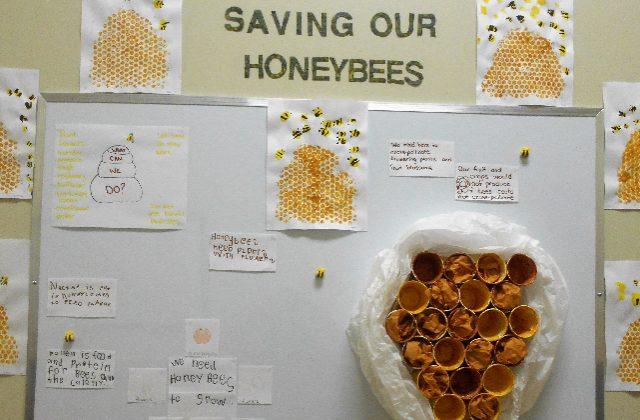 Saving our Honeybees Display